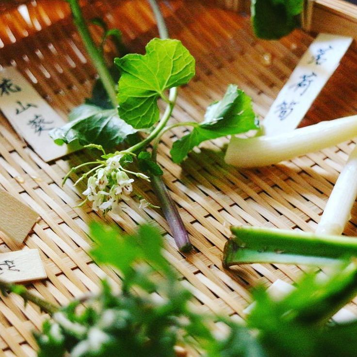 Spring wild vegetables from Obora mountain in Mie. #花山葵 #芹 #こごみ #蓬 #茗荷筍 #独活 #isesueyoshi #kaiseki #vegetables #sansai #山菜 #japanesefood #japanesecuisine #japan #japon #spring #washoku #l4l #like4like by isesueyoshi
