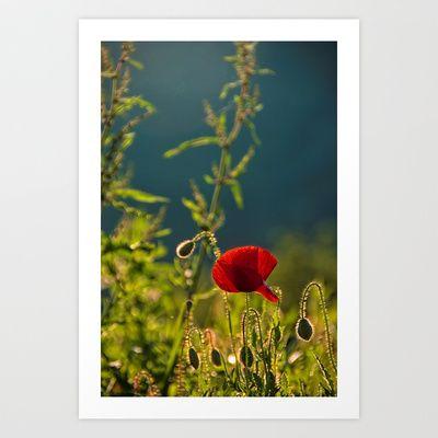 Poppy Art Print by marialivia16 - $14.04
