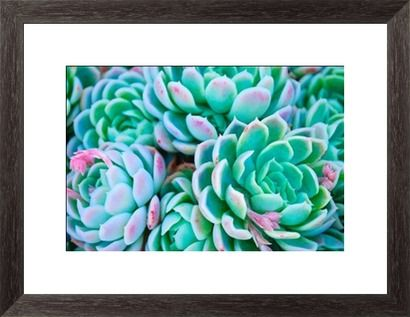 'Hens and Chicks' Succulent in soft focus Print by LazingBee at Photos.com