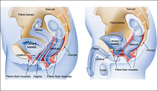 Urinary Incontinence Surgery (With images) | Pelvic floor