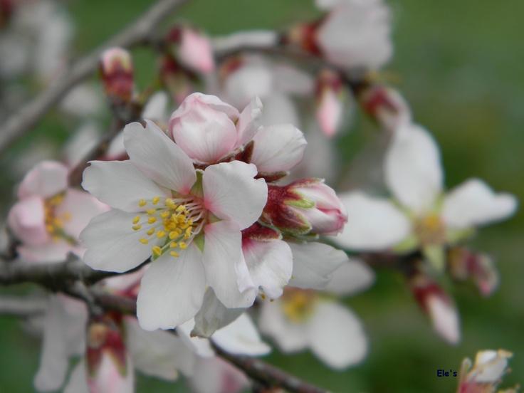 Pasqua e Pasquetta fuori porta, parchi e oasi WWF aperti. Giusto modo per pic nic al verde  http://mediterranews.org/2013/03/pasqua-e-pasquetta-fuori-porta-parchi-e-oasi-wwf-aperti-giusto-modo-per-pic-nic-al-verde/