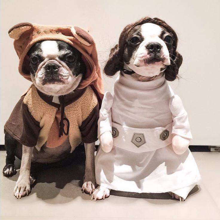 107 best DIY Dog Costume Ideas 2018 images on Pinterest