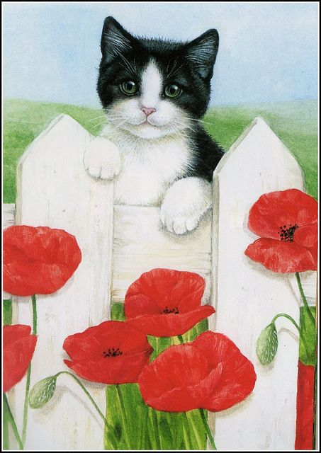 #cat #illustration | cat with red poppies | pinned by www.amgdesign.co.nz