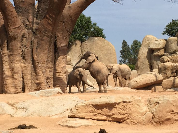 The Wonderful Elephants At The Bioparc