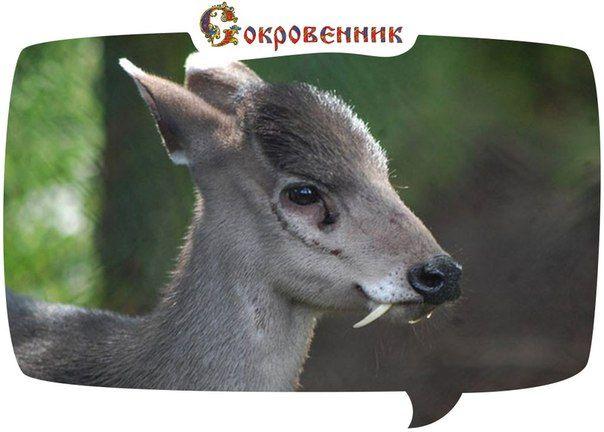 Сокровенник   Интересные Факты. Цитаты. Новости.