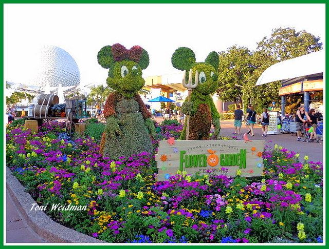 37 best Disney World Flower Garden Show images on Pinterest