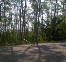 Tanah dijual di Bogor Jonggol, Murah Plus Pohon Sengon, Luas tanah 11.230 m2, Pohon Sengon 2000 batang usia 5th, Harga Rp.120,000/m2..