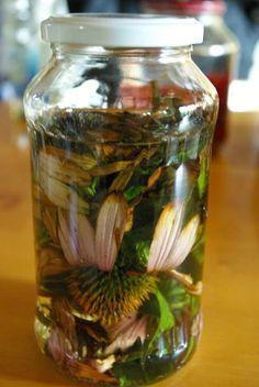 Echinacea-Tinktur zur Immunstärkung