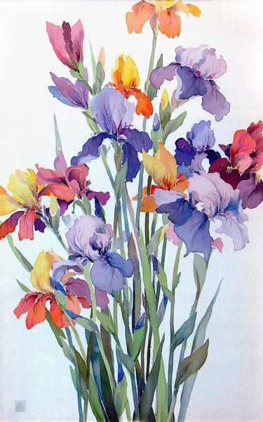 Coloured iris bouquet watercolour