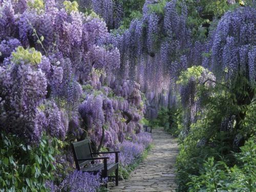 Beautiful Portals: Favorite Places, Purple, Nature, Beautiful, Wisteria, Gardens, Gardening, Flowers