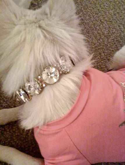Rhinestone Dog Collar by karenglitt on Etsy, $45.00 cant be comfortable. cute for pics