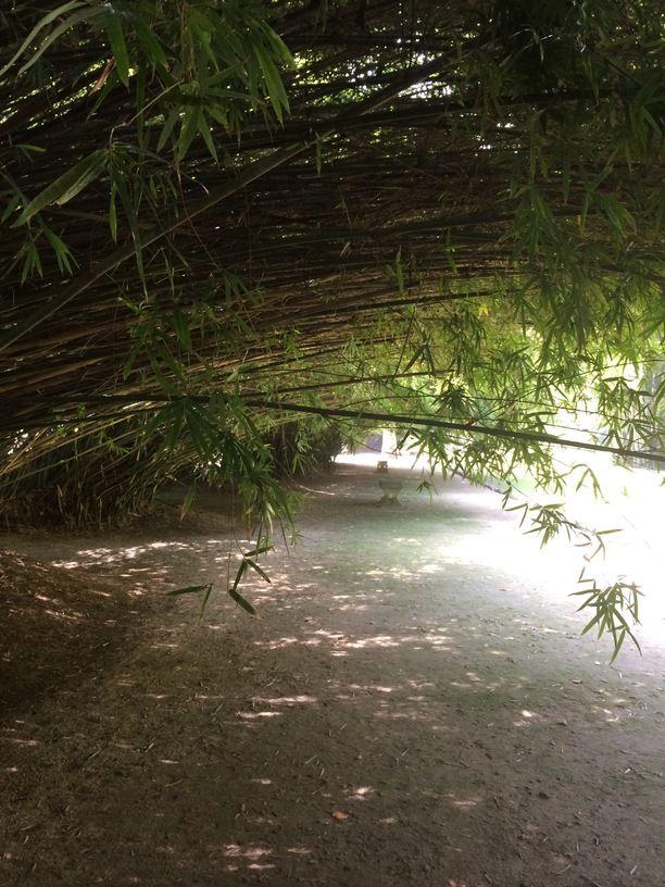 Jardim Botânico do Rio de Janeiro, Rio de Janeiro, Brazil — by Gilberto Bic. Bamboo alley. A Meditation place