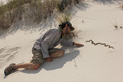 Having a close up meeting with a wild gophersnake during a research trip to the White Sands in New Mexico.