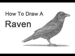 Wie zeichnet man einen Raben (oder eine Krähe) …