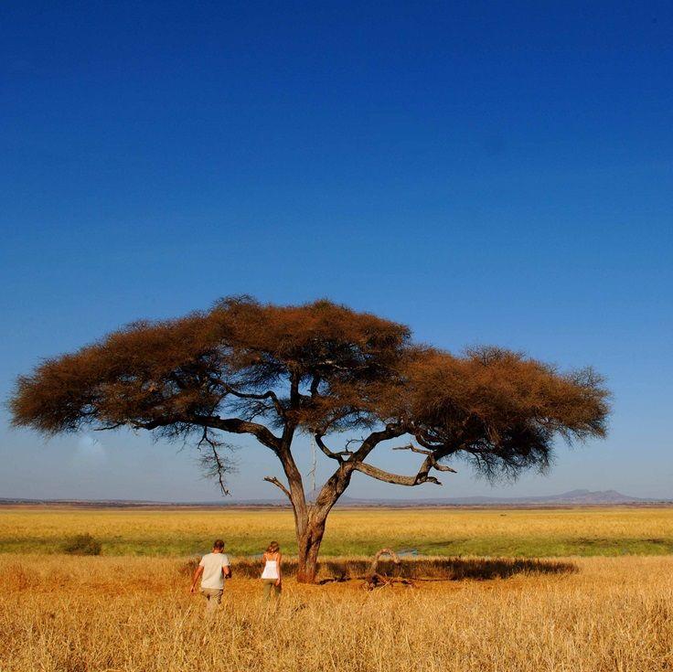 The best-kept secret safaris in Africa are in Tarangire   Tanzania