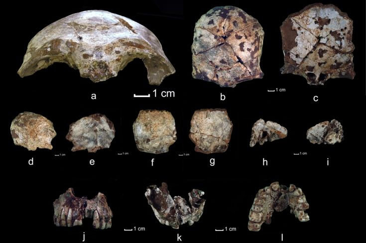 63,000 year old skull fragments of modern humans discovered in Laos. Homo sapiens fossils in Asia confirm that 'out of Africa,' humans colonised far and wide, but perhaps earlier than previously thought.