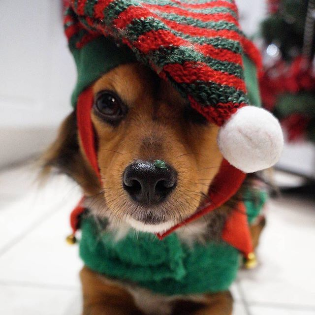 The Christmas Countdown Has Began Our Little Helper And Chief Of