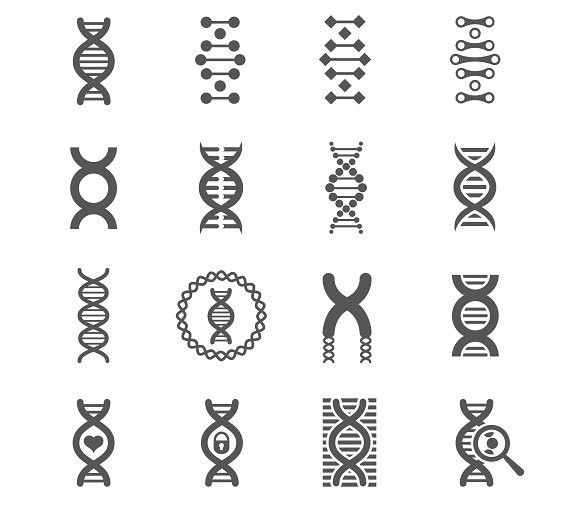 DNA spiral vector black icons. Human Icons. $4.00