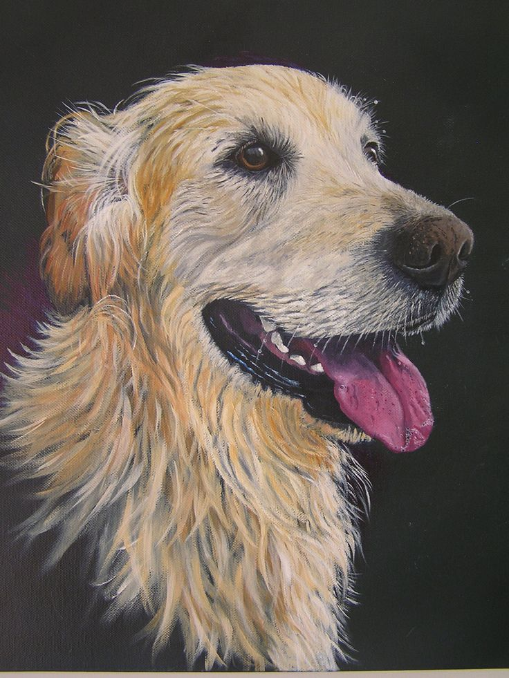 'Lockey' To commission a pet portrait drop me a line at new.life1965@hotmail.com Gift vouchers also available