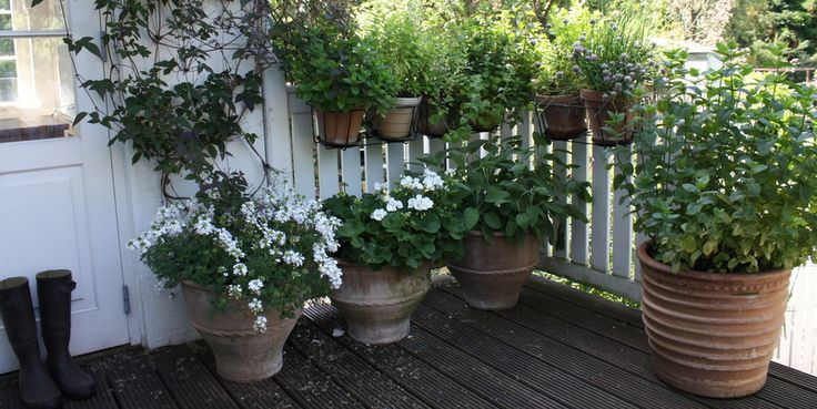KRULLS KRUKKEHAVE - Container garden