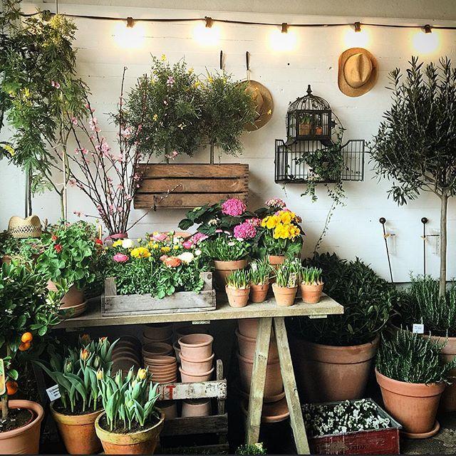 Tror inte jag kan hålla mig borta från butiken idag.. vill fortsätta fixa & göra påskfint!!  #kockskagårdenblommor #simrishamn #österlen #blommor #inredning #trädgård