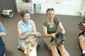 Dog Training Classes Roseville Ca For Free