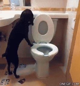 Você realmente sabia? Humor: Cãozinho educado é assim...