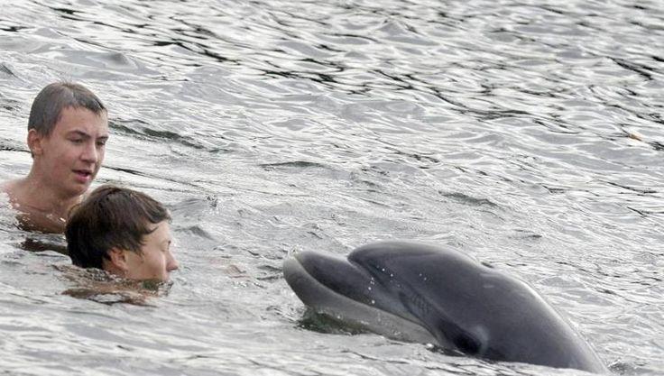 Exoten im Norden: Ostsee könnte Heimat für Delfine werden - N24.de