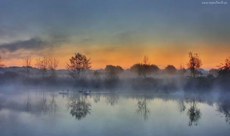 Mgła, Rzeka, Odbicie, Drzewa, Łabędzie, Niebo, Chmury