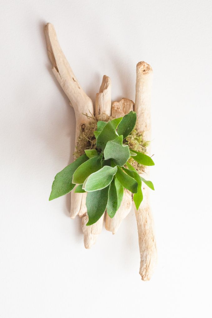 DIY guide to mounting and caring for a staghorn fern