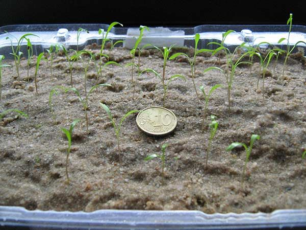 2014 Best Spring Planting Dates for Seeds By Location