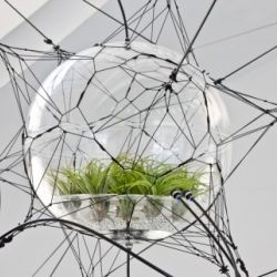 terarium essay Terrariums allow you to grow plants which require a high degree of humidity, which otherwise would probably perish in the dry atmosphere of a heated home.