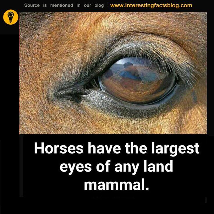 Horse Eye Interesting Facts
