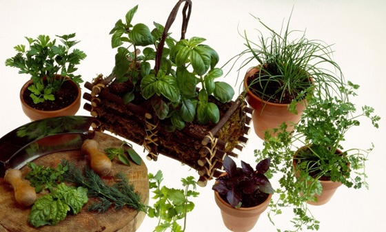 Good list of 66 Fruits, Vegetables and Herbs You Can Grow In Containers