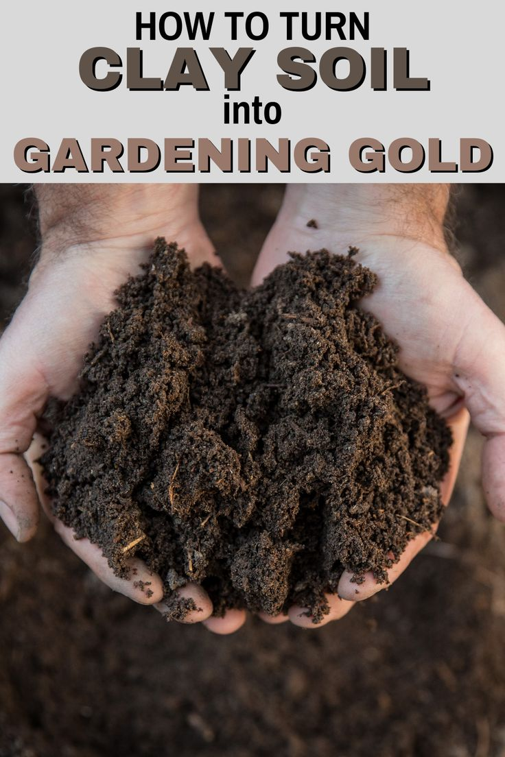 How To Turn Clay Soil Into Gardening Gold Vegetable Garden Diy Vegetable Garden Tips Clay Soil