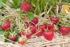 Article - Que faire en août au jardin en climat continental ?