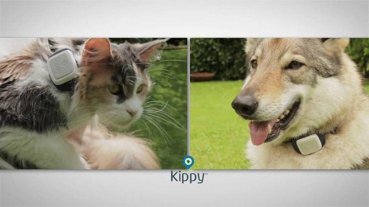 I migliori GPS per cani, gatti e animali del 2017, guida all'acquisto -  Avete paura di perdere il vostro amico a 4 zampe? Tranquilli! Fate un bel respiro e iniziate a valutare l'acquisto di un tracker gps in grado di tracciare tutti i movimenti del vostro cane o del vostro gatto. Cosa sono i tracker GPS per animali? Semplice! Sono dei piccoli accessori che... -  http://www.tecnoandroid.it/2017/02/10/i-migliori-gps-per-cani-gatti-e-animali-del-2017-guida-allacquisto-216