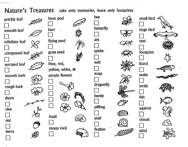 20+ Nature Scavenger Hunt Ideas » Dragonfly Designs
