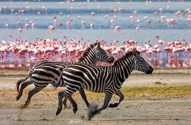 Wildlife photography is one of the very challenging forms in the field of photography. Description from incrediblesnaps.com. I searched for this on bing.com/images