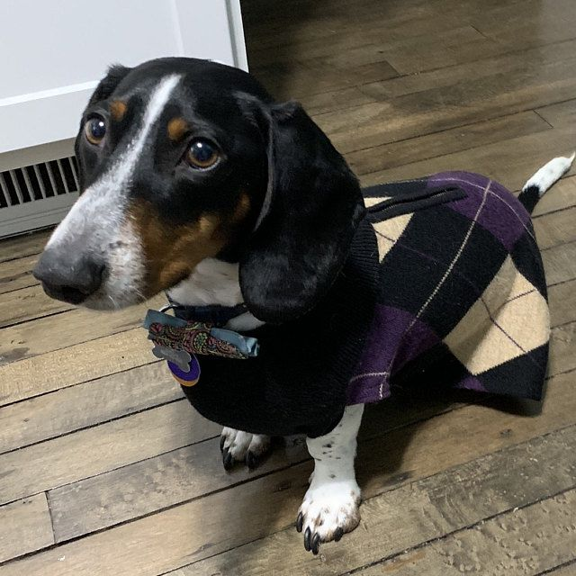 Sewing Pattern Small Dog Harness With Leash Instructions Dog