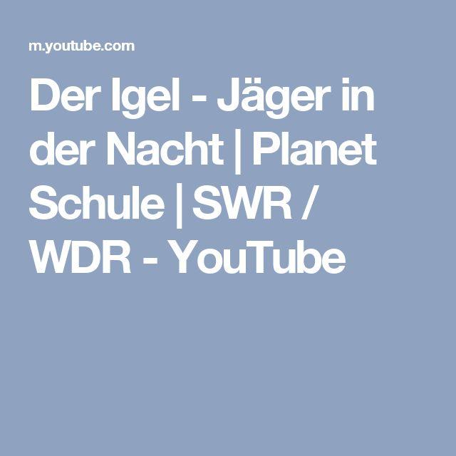 Der Igel - Jäger in der Nacht | Planet Schule | SWR / WDR - YouTube
