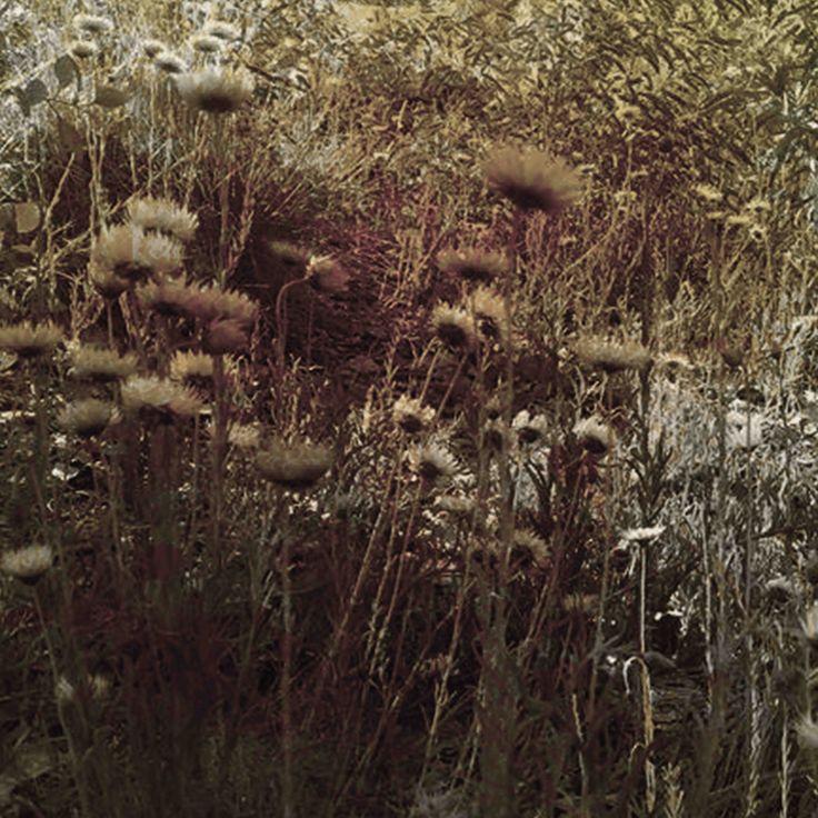 James Mclean Mixed Media Artist RustFlower Medium: Photography + Digital Manipulation Size: 100cm x 100cm