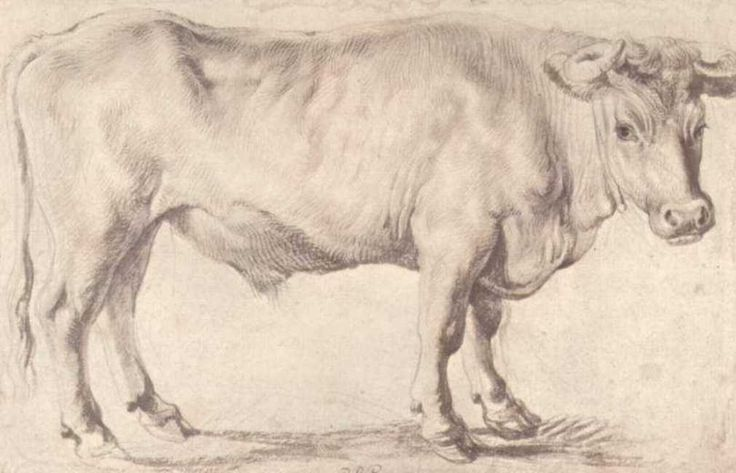 Bull, 1618-1620  Peter Paul Rubens