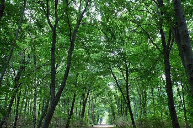 Forest at Großer Tiergarten, Berlin, Germany | Everything but Science