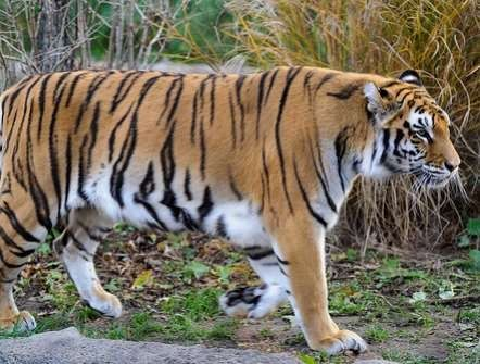 Animal Sanctuaries in West Bengal, India @ Sanctuariesindia.com