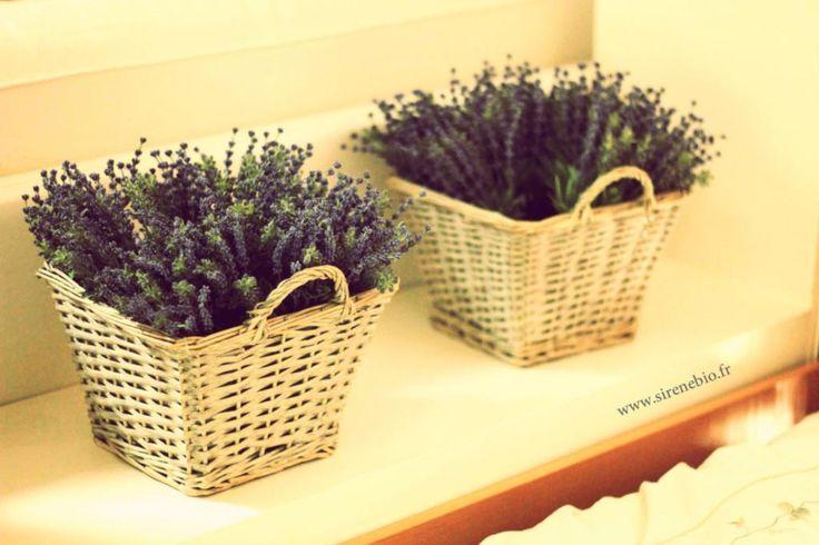 les 91 meilleures images du tableau jardin terrasse plantes d 39 int rieur sur pinterest id es de. Black Bedroom Furniture Sets. Home Design Ideas