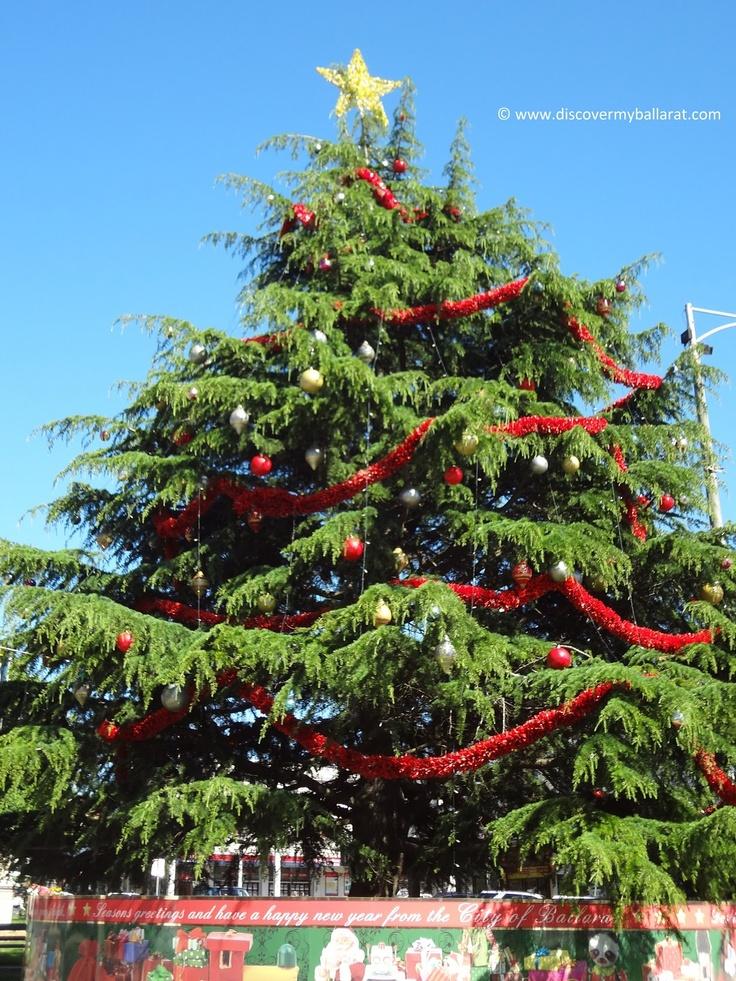 Christmas Tree - Sturt Street, Ballarat