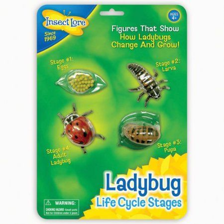 Life Cycle Stages -Ladybug, Multicolor
