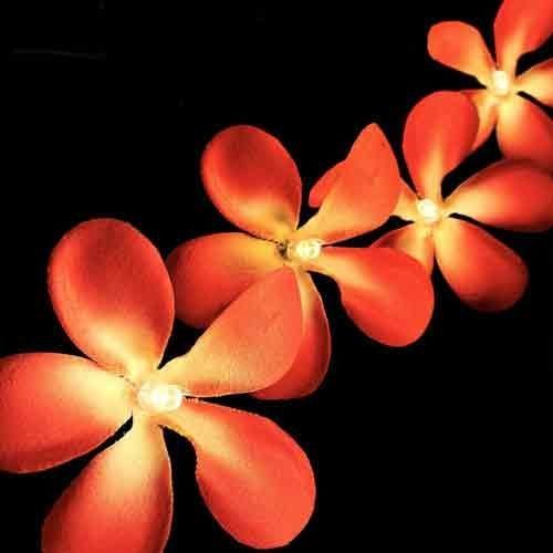 Tropical Bloom - LED 20