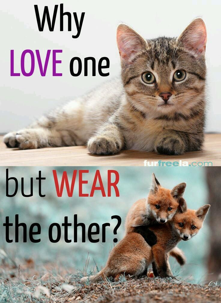 it is wrong to kill animals for their fur do you agree The bible and the animal liberation movement  regardless of their claims, animal liberators do not believe what jesus  you're wrong if you kill a fish,.
